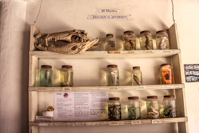 Kandy Muzeum Archeologiczne