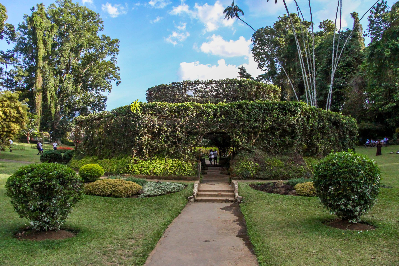 Ogród Botaniczny Peradeniya