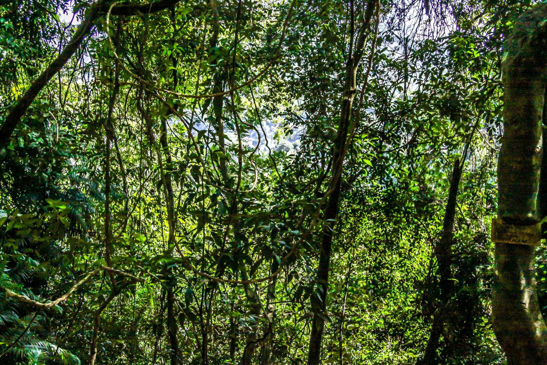 Kandy, Lady Horton's Walk