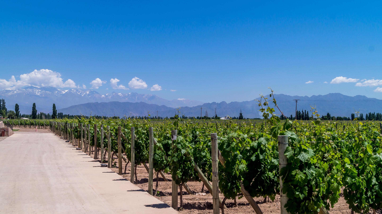 Wina, winiarnie, Mendoza, malbec