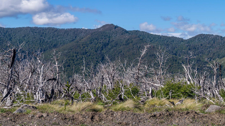 Park narodowy i wulkan Lanin