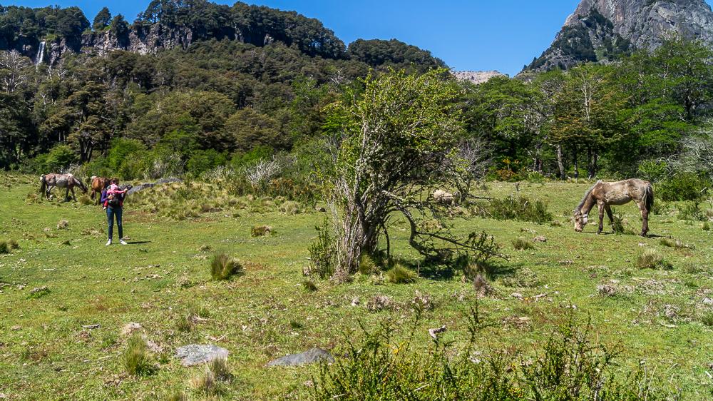 Lanin park narodowy wulkan, argentyna, patagonia