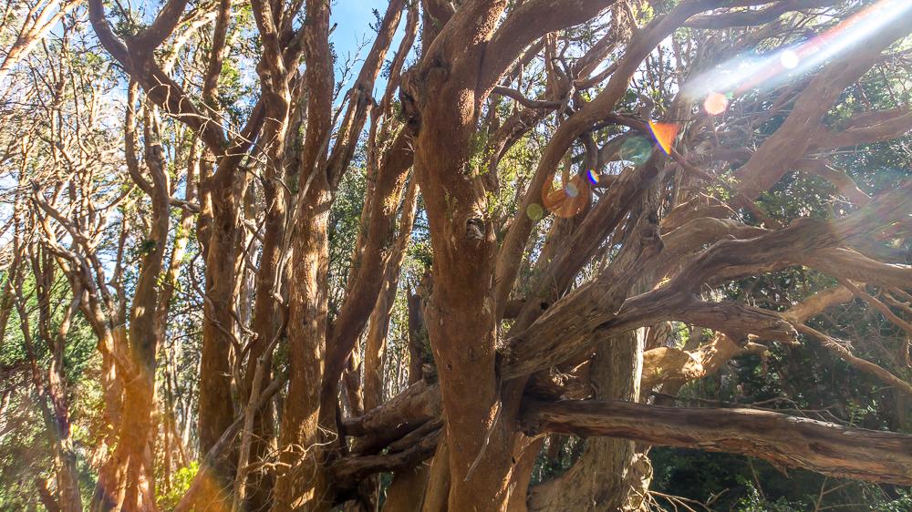 Los Arrayanes Villa la Angostura park narodowy drzewa