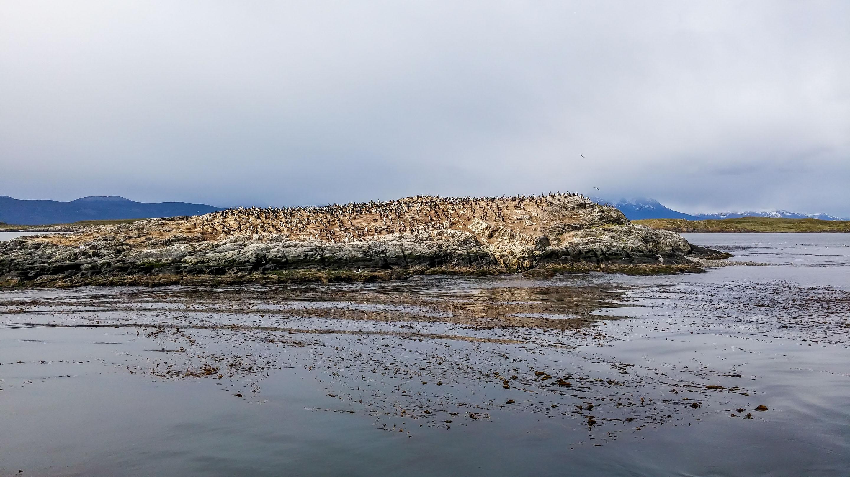 Kanał Beagle Wyspa ptaków