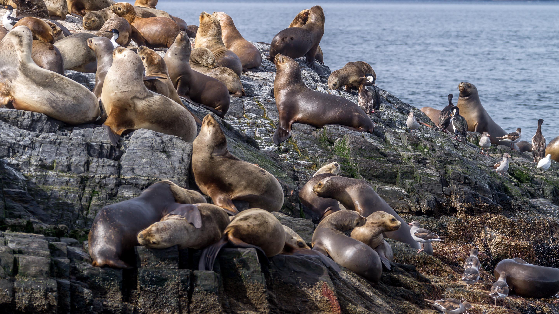 Kanał Beagle Wyspa lwów morskich